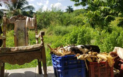 Volunteering in Cuba